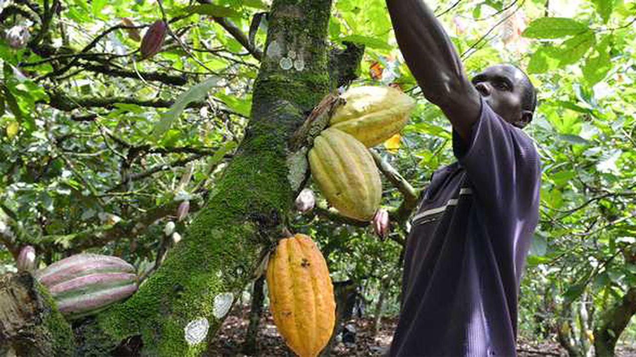 Agriculture-Café Cacao : Pas de nouveau prélèvement sur le revenu des producteurs (Impôt).