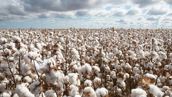 Agriculture : l'Etat va faire du secteur coton le premier de l'Afrique de l'Ouest, soutient Patrick Achi