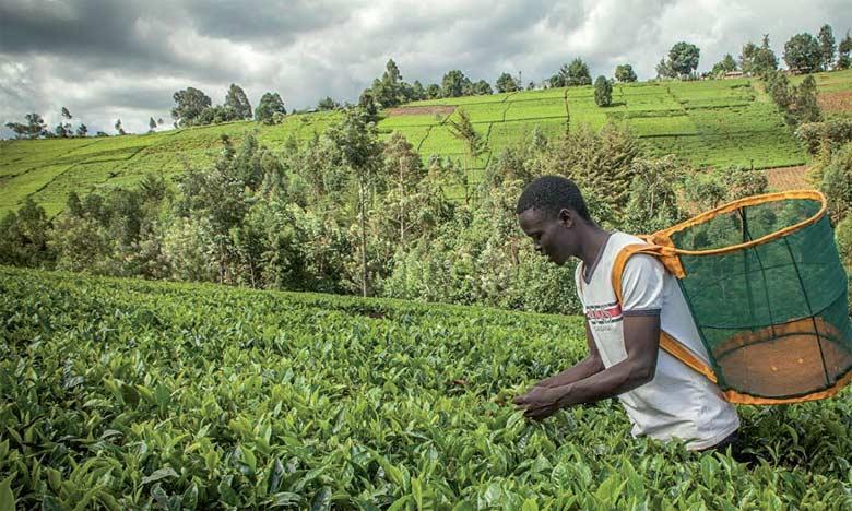 Les petites et moyennes entreprises piliers de l'agriculture sur le continent, pour la Banque africaine de développement