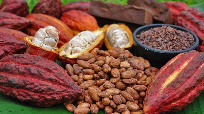 Traçabilité du cacao : La Côte d'Ivoire et le Ghana diffèrent la mise en œuvre de la norme ISO 34101